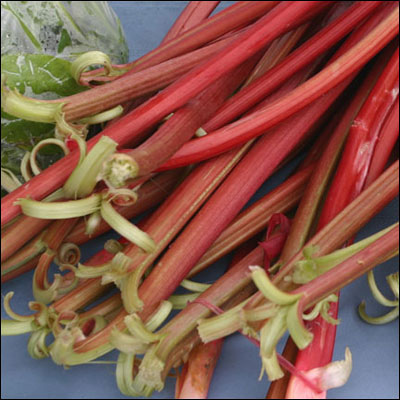 Delicious red rhubarb for recipes