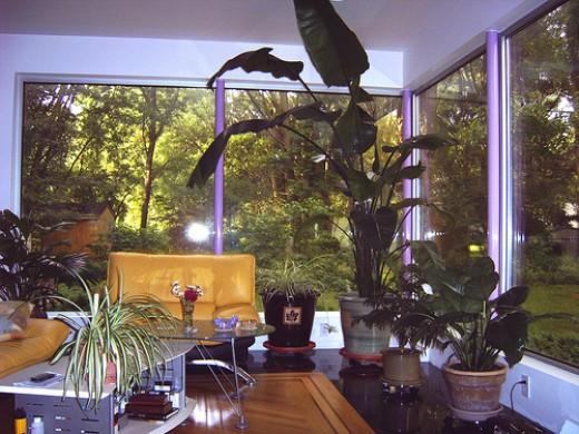 Living room corner window!