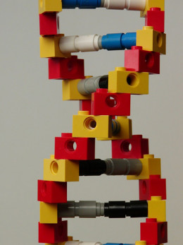 Example of a DNA strand built from Legos