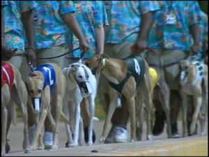 Lead-outs bringing dogs to the starting gate.
