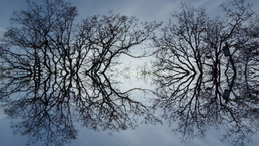 Here are bare tree branches spreading out in reflecting mirrored glory.