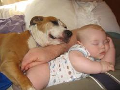 Pit bulls make loving pets.