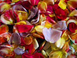 These would probably make some colorful rose petal ice cream! You just have to be sure that all flowers used are edible and safe to use for cooking.