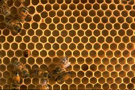 A bee hive - a great source of high quality products, such as honey, beeswax and propolis.