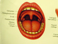 Tonsillectomy for Adults and The Recovery Period