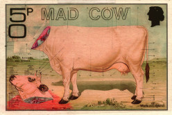 Mad Cows and Mad Cow Disease