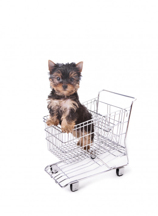 You don't need to ready every dog food label in the store to find the best value!