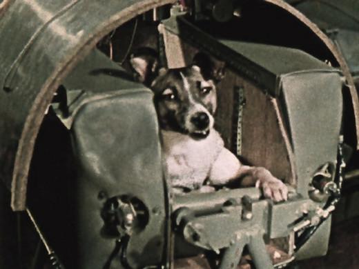 Laika, the Space Dog.