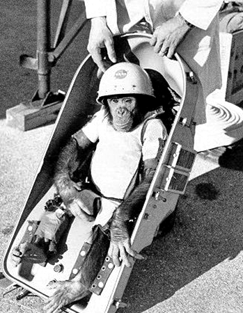 Albert II, the first Space Monkey