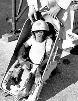Albert II, the first Space Monkey