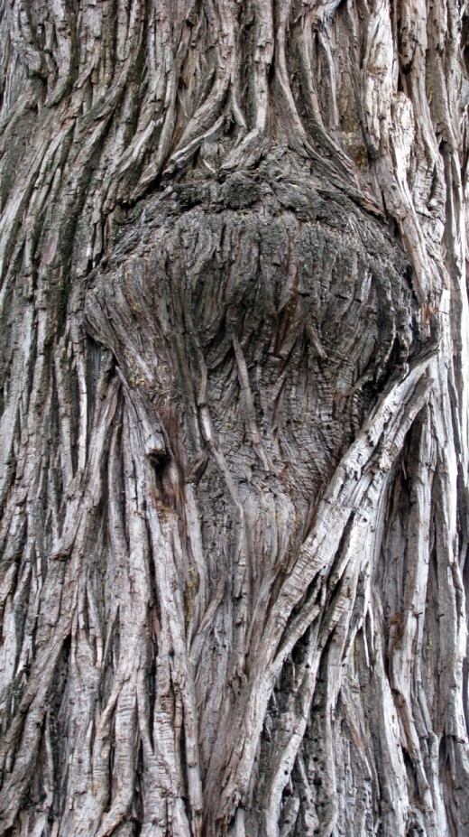 I took this photograph of the tree that was to my left when I was sitting at the cemetery.  I thought the bark patterns looked like wrinkles on an old man's face.  This is also the tree where Jon Almada recorded the great EVP of a little boy saying,