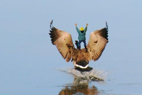 Yee! Haw! Safe landing Honker!