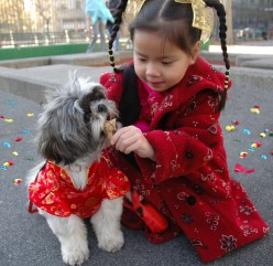 Characteristics of People Born in the Chinese Year of the Dog