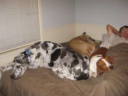 Narcolepsy Dogs