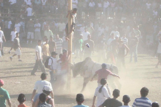 The air full of dust in the arena where boys are taunting a bull .  It is that time of the year again for the Fiestas Civicas in Liberia.  I am ready to take more photos!