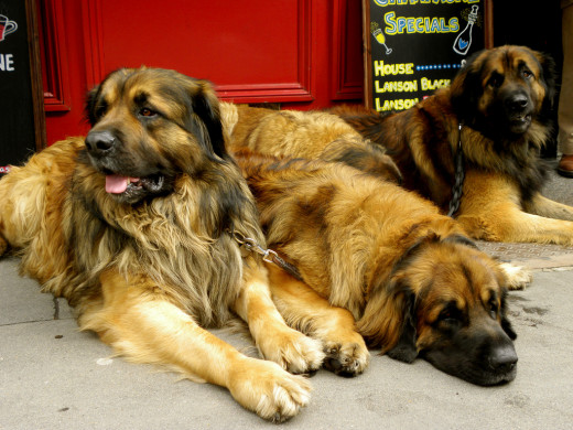 Three large dogs means triple the bills.