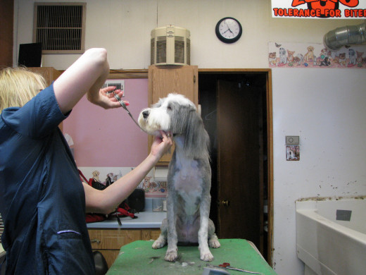 Many long haired breeds require trips to a professional groomer.