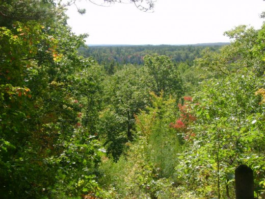 The view from an overlook in the Pigeon River Country State Forest.