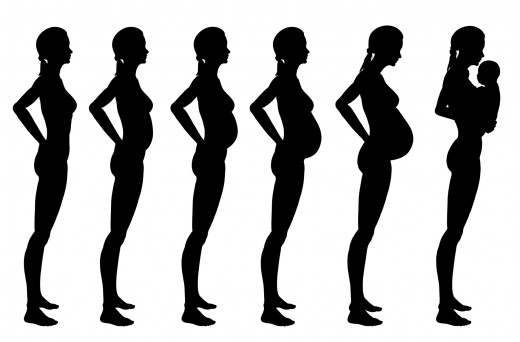 Stages of Pregnancy