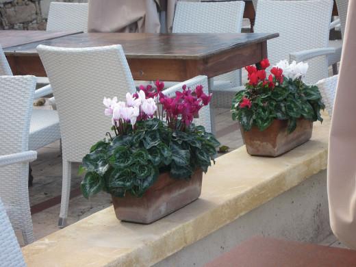winter flowers in Cyprus
