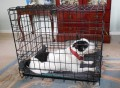 How to Crate Train Your Puppy or Dog
