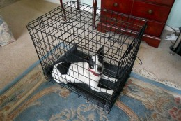 If you are choosing a crate to help in house training a puppy, it is important that it is not too big.