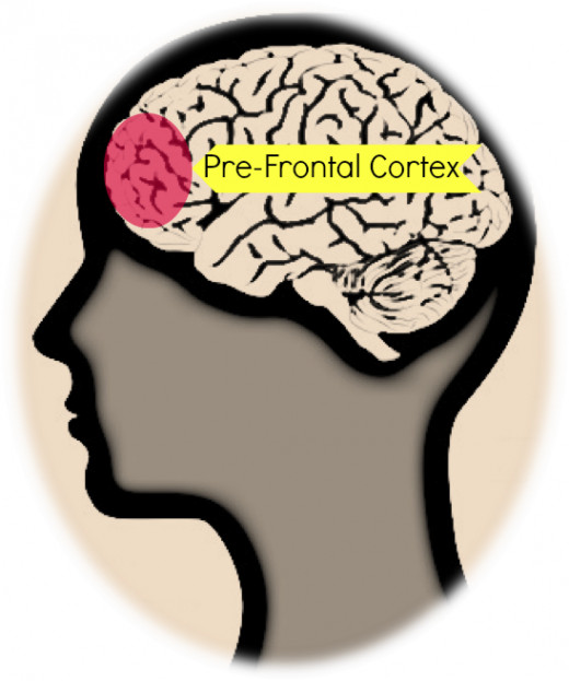 diagram 1: The Pre-frontal Cortex