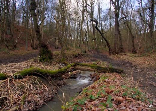 A little woodland stream