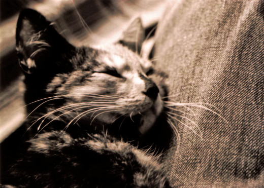 Taking a cat nap is not just for cats--a thirty-minute snooze can rejuvenate your energy and improve your mood.