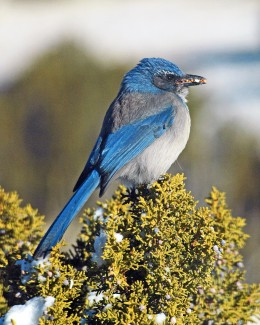 A beak full of seeds is wonderful...