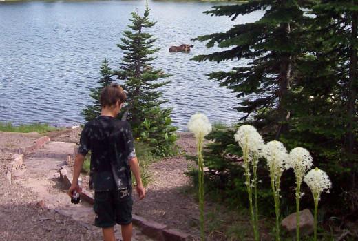 Bear Grass, My Son & The Moose