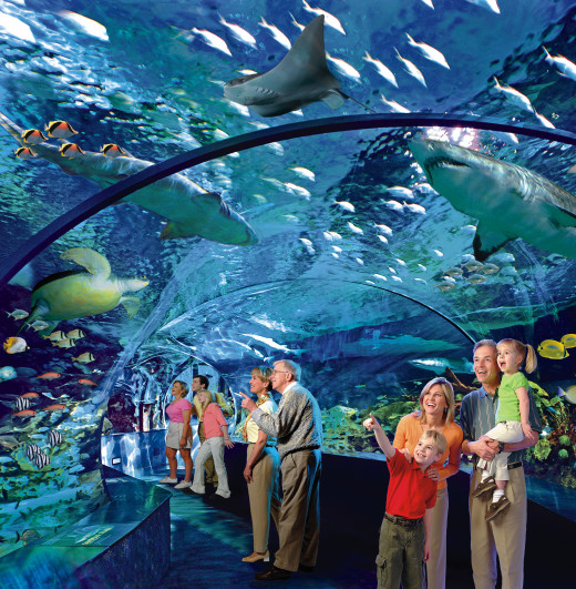 A preview of what the viewing tunnel in Shark Lagoon is expected to look like.