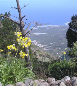 View looking down from Talavera