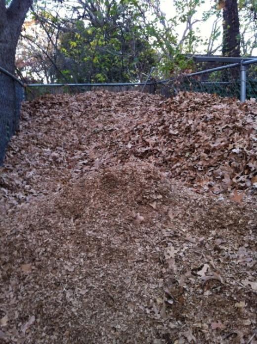 Shredded leaves in piles
