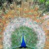danvantari profile image