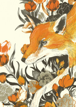 Animal Drawings: Foxes