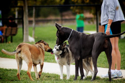 Off Leash Dog Park Etiquette