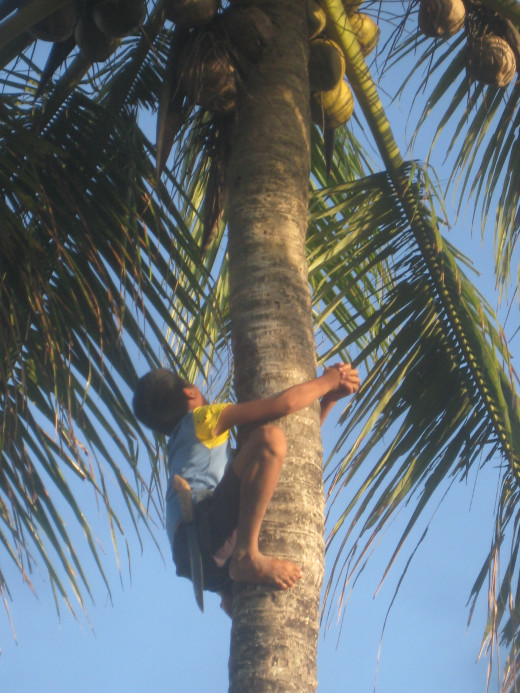 The kid climbing the coconut tree (Photo Source: Ireno Alcala)
