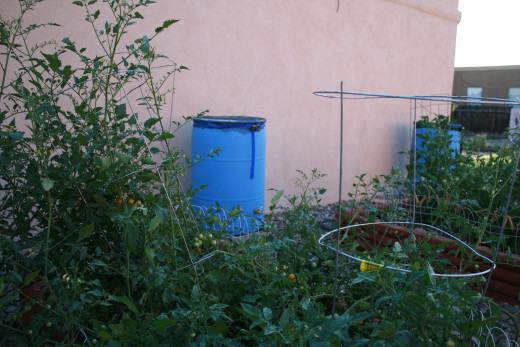 Tomatoes grow wonderfully.  House equipped with water barrels too!