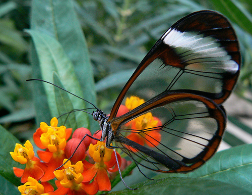 Characteristics of Butterfly