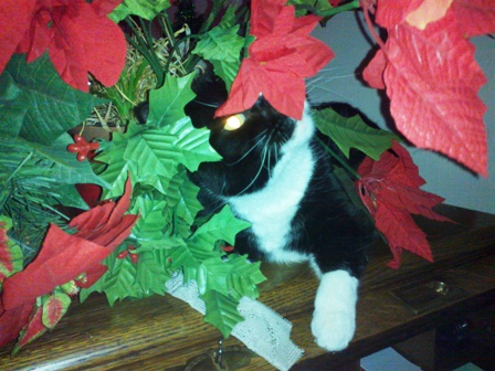 Snip hides in floral bouquet. Cat hiding while observing his environment.