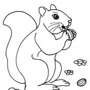 jsquirrel profile image