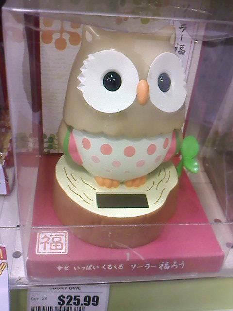 Owlet with her pleading eyes as she wants to go home with me.