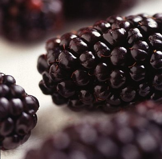 Genetically Modified Blackberries