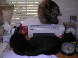 My cats constantly fight over who was scanned last..