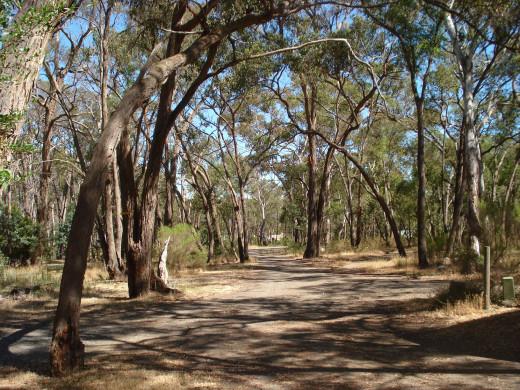 A Bush Track