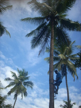 Unless you want to go and pick your own coconuts, the best source of coconut juice is from the internet!