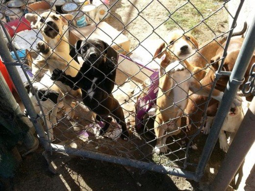 Good Samaritan discovered 8 puppies unsafe, deplorable conditions by a backyard breeder.