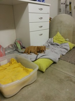 One pup finds a much needed resting spot for a nap.