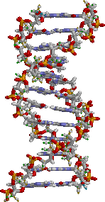 The thread like structure is two entwined DNA molecules otherwise known as a chromosome. The other DNA molecules form a spiral shape(double helix) that is linked by four bases.